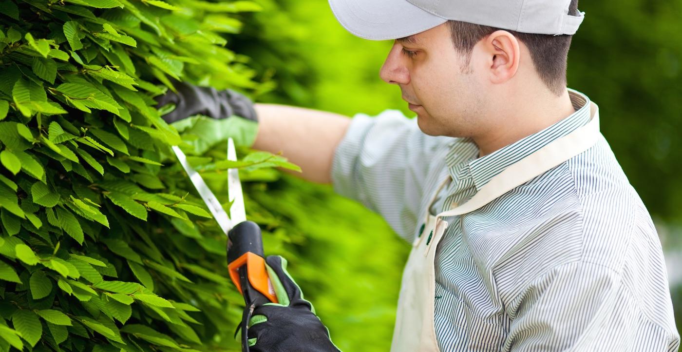 Encontre o mais eficiente jardineiro em portugal for Trabajo jardinero